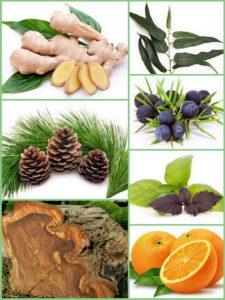ароматы для зимы