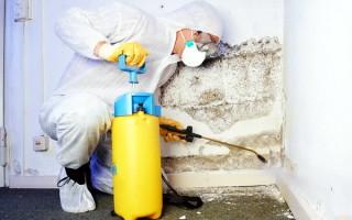 Причины, ведущие к появлению плесени, средства для удаления грибка